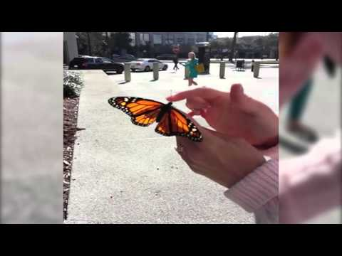 Butterfly Freedom Fail