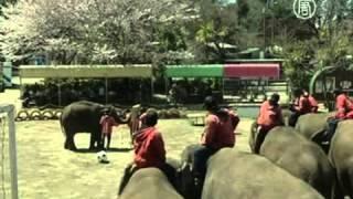 Слониха рисует цветущую сакуру(( http://ntdtv.ru ) Весна в токийском зоопарке идет полным ходом. Местный слон вовсю рисует сакуру, а недавно родивш..., 2012-04-09T15:44:03.000Z)