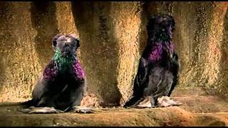 Der Zauber der Taube - Arte - Teil 2 von 3