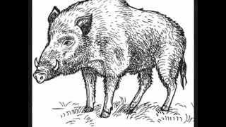 White wild boar Remix