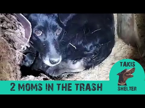 Unbelievable rescue story! Dog steals puppies from another - Petra&Gloria - Takis Shelter