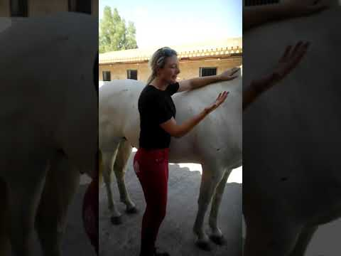 Teaching Equine Sports Massage to Horse Owners in Mijas Spain PT2