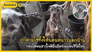 แม่หมาผอมโซถูกล่ามโซ่ทิ้งให้นอนหนาวนอกบ้าน ก่อนได้พบสาวใจดียื่นมือช่วยมอบชีวิตใหม่ | Dog's Clip