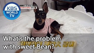 What's the problem with sweet Bean? [Dogs are incredible/ENG/2020.10.21]