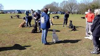 Dog School, Indoor And Outdoor Dog Training.  With Adolescent Dogs.