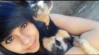 Como lidar com a morte de um animal de estimação?