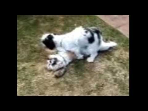 Lesbians dog mating 1 thumbnail