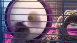 vuclip Hamster Hell