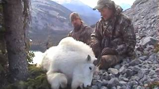 British Columbia Mountain Goat Hunts
