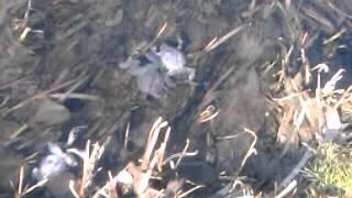 Rzeka Sudoł - martwe zwierzęta
