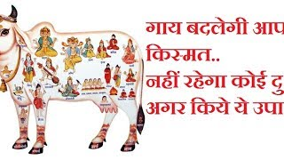 मुफ्त और आसान उपाय benefits of feeding cows in astrology(Astrology and horoscope) thumbnail