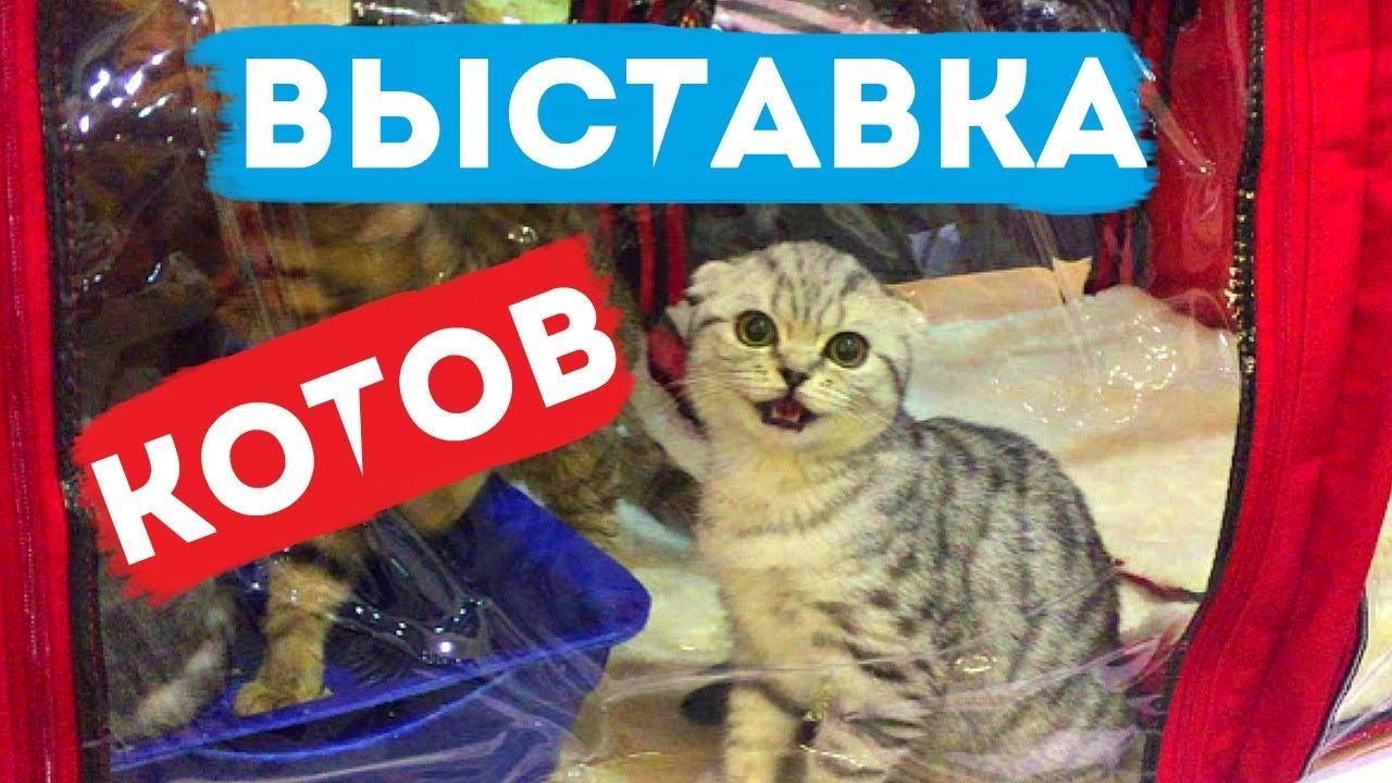 Выставка котов и кошек в Киеве / Очень большой кот / Редкие породы из всего мира