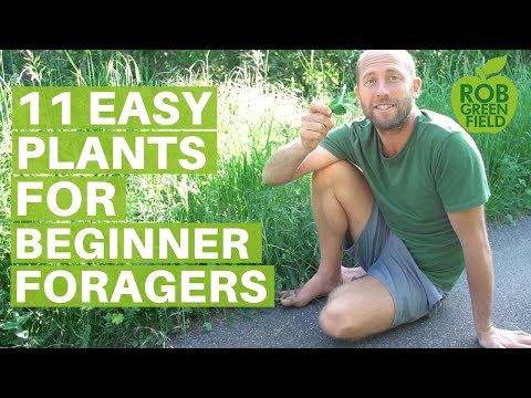 11 Easy Edible Plants for Beginner ForagersEating Wild Food