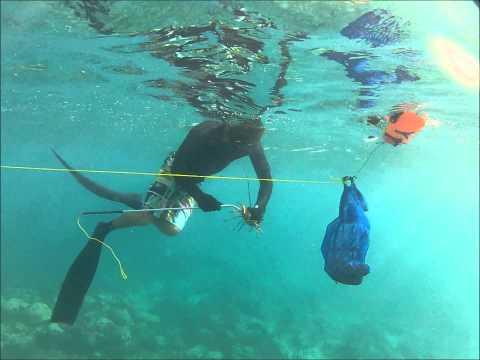 Pèche langouste Grenadines