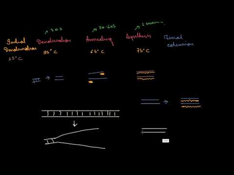 polymerase-chain-reaction-(pcr)-extra-steps