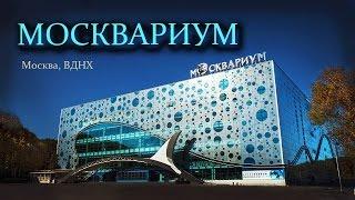"""Москвариум"". Океанариум на ВДНХ в Москве"