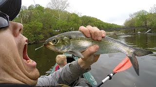 Kayak fishing for shad and fishing for catfish - Catfishing with shad - catch shad with lures