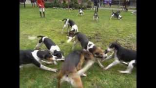 Humane Fox Hunt. http://duaneburnett.com SHORT Version http://youtu...