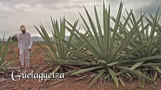 Cobertura Guelaguetza: Fandango de Miahuatlán de Porfirio Díaz