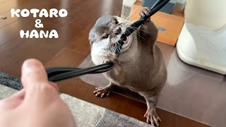 脂肪燃焼効果がすごいカワウソのチューブトレーニング Otter Resistance Tube Exercises