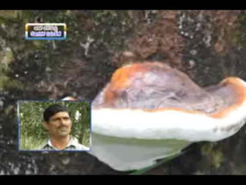 10 9 2015 disease management in arecanut dr b gangadhara nayak