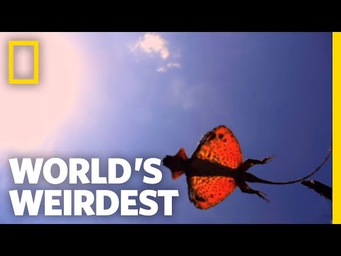 The Flying Dragon | World