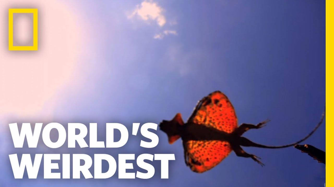 The Flying Dragon World S Weirdest Youtube