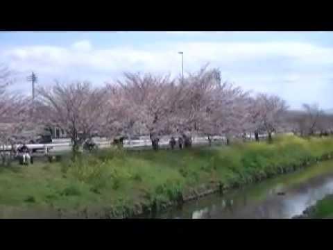 春爛漫松の中径から白陰さくら街道.mpg