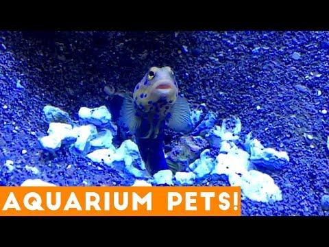 Funny Pets at the Aquarium   Funny Pet Videos