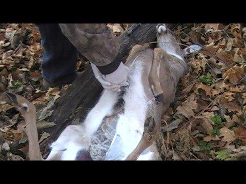 FIELD DRESSING LARGE GAME - Deer