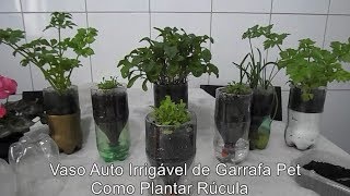 Como Plantar Rúcula – Vaso Auto Irrigável de Garrafa Pet