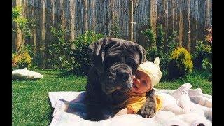 Собаки и дети, лучшие друзья | Часть 4 | Dogs and Baby, the best video