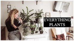 Plant care & tips ON A BUDGET