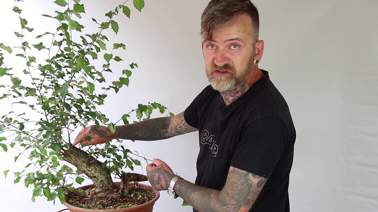 How To Carve Bonsai Deadwood By Harry Harrington Youtube