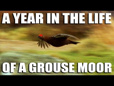 A Year in the Life of a Grouse Moor