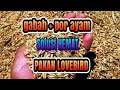 Lovebird Ternak Koloni Super Hemat Gabah Dan Voer Ayam Solusi Pakan Lovebird  Mp3 - Mp4 Download