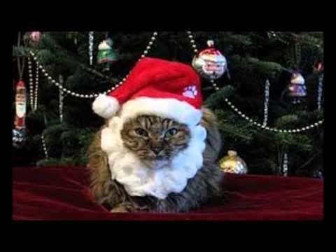 WHF - Weihnachtskalender: 16 - Bald tanzen wir um den Weihnachtsbaum