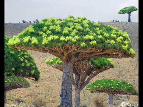 Socotra Island: The Most Beautiful-Mysterious (or Alien-Looking) Place on Earth