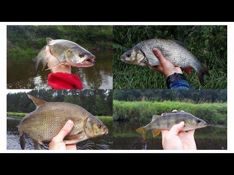 ЩУКА / ГОЛАВЛЬ / ЖЕРЕХ / ЯЗЬ/А какие виды рыб на тенкара ловили Вы ?