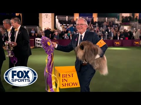 Wasabi-the-Pekingese-crowned-Best-in-Show-at-145th-Westminster-Kennel-Club-Dog-Show-FOX-SPORTS