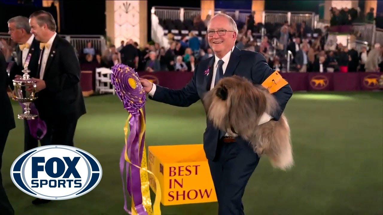 Castigatorul competitiei Westminster Dog Show din New York este un pechinez