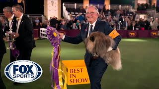 Wasabi, the Pekingese, crowned Best in Show at 145th Westminster Kennel Club Dog Show | FOX SPORTS