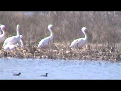 Goose Pond Fish & Wildlife