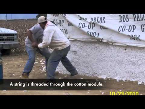 Cotton Process