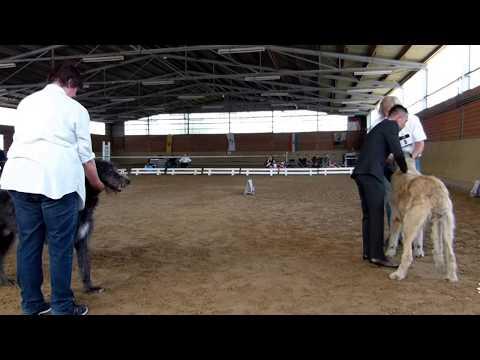 Competition Best Dog Mönchengladbach Irish Wolfhound