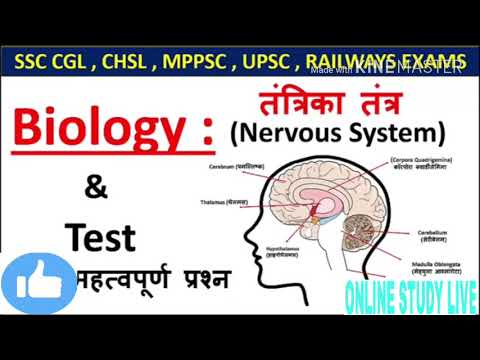 Important GS human Nervous system all xam#ssc railway BPSC CDSसभी में पुछा जाता है