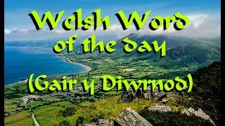 Welsh Word of the Day: Defaid - Sheep