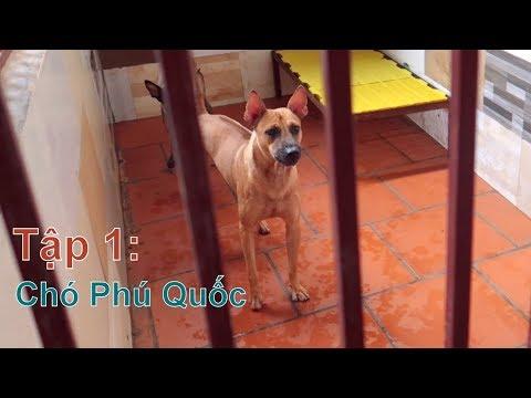 T1: Thăm Trại Nhân Giống Chó Phú Quốc tại Hà Nội/ Quốc Khuyển Việt Nam/ NhamTuatTV - Dog in Vietnam