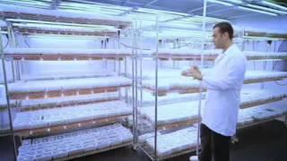 Algen Tarım ve Gıda San. Tic. Ltd. Şti.