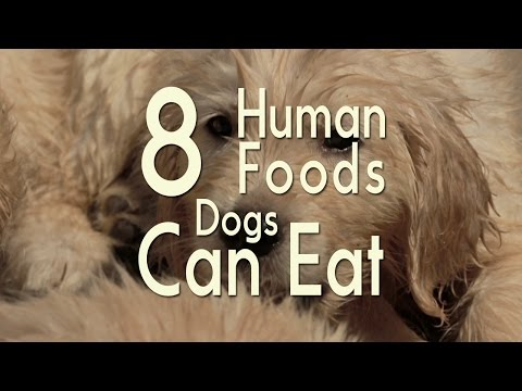 8 Human Foods Dogs Can Eat